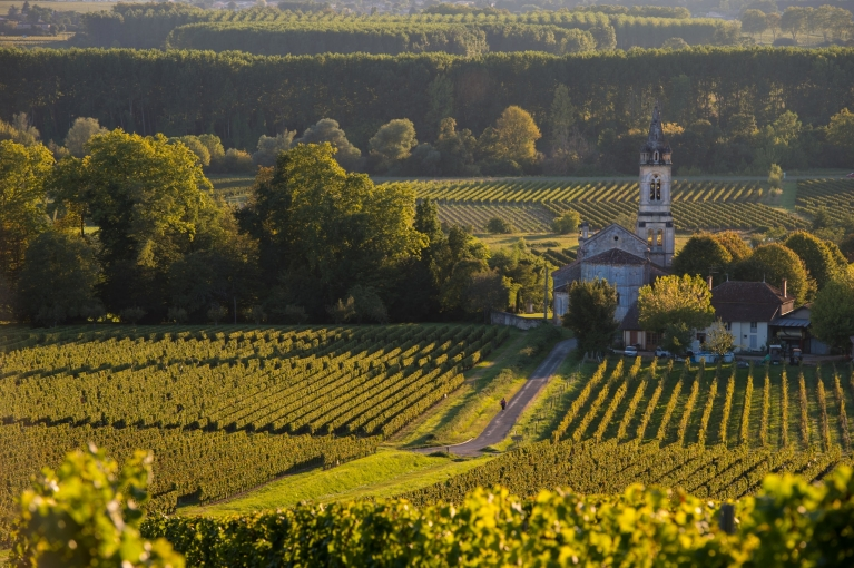 Vineyards in the Bordeaux region
